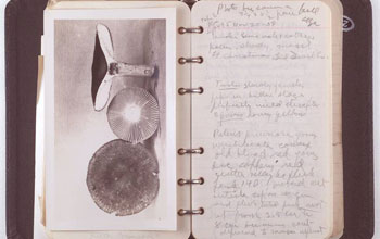Photo of field notes written by scientist Gertrude Burlingham during a collecting trip.