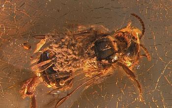 Fly specimen