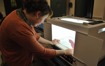 Researcher Clare Loughran takes a digital photo of a red seaweed using a special light box.