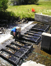 Photo of a scientist conducting a stream experiment to track biodiversity.
