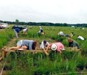 Photo of biologists sampling plants at the Cedar Creek Long-Term Ecological Research site.
