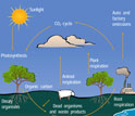 Illustration showing the carbon dioxide cycle.