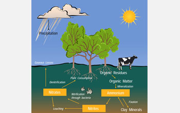 Illustration of the nitrogen cycle.