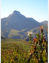 Photo of South Africa's Cape Floristic Region.