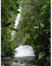 Photo of a stream and waterfall at the Mindo Biological Station in the Ecuadorian Andes.