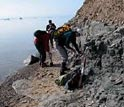 Photo of the researchers collecting fossil leaves from a site in East Greenland.