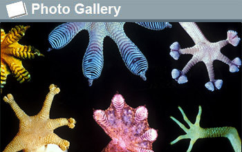 graphic showing various marine organisms and the text photogallery
