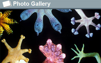 various marine organisms and the text photogallery