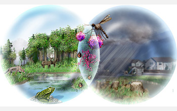 Illustration with healthy forest on left, deforestation on right, and mosquito and ticks in middle.
