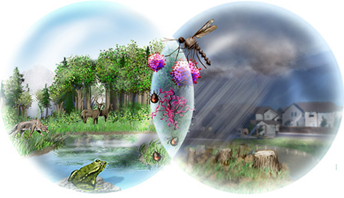 Biodiversity Loss: Detrimental to Your Health- All Images   NSF ...