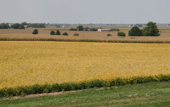 Image of row crops in the midwestern United States in early autumn.