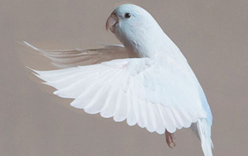 Researchers study birds to improve how robots land | NSF - National