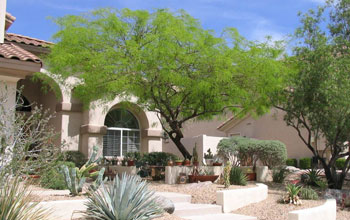 Photo of a xeric, or desert, yard in Phoenix.