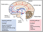 brain activity diagram