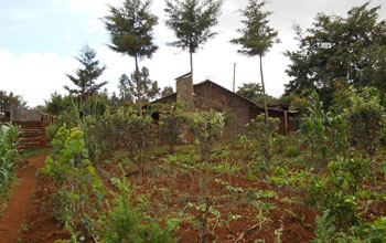 Smallholder farm house surrounded by trees in rural Kenya