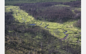 An aerial view reveals the extent of a 2003 fire in the boreal forests of Manitoba, Canada.
