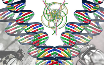 RNA loops and knots guide genetic modifications