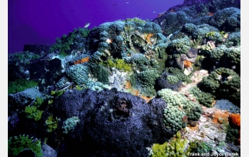 Corals like these in the Gulf of Mexico are affected by the increasing acidity of the oceans.