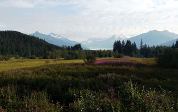 Photo of a meadow with wildflowers surrounded by evergreen trees with mountains in the background.