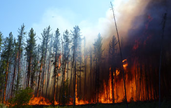 Alaska forest fire near NSF's Bonanza Creek LTER site