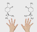 Image of a two mirror molecules with right and left hands.