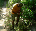 Photo of Jatinder Singh examining a plant in Tanzania's Mahale Mountains National Park.