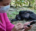 Foreground:  Taranjit Kaur entering data into a PDA; background: sleeping chimpanzee.