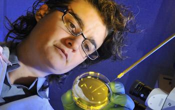 Researcher Carla Finkielstein examines mutations of circadian proteins.