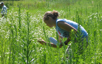 Photo of a student observing patterns of flowering and pollinators.