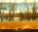 a burning prairie.