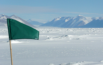 Photo of a green marker flag in the area where researchers are working.