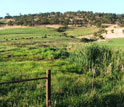 Photo of a wetland in an agricultural area in the Sierra Foothills of California.