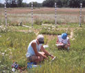 Photo of Tali Lee with student intern Ann Karpinski taking measurements of plant response to CO2.