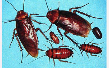 Photo showing cockroaches.