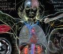"""A DaVinci Blackboard Lesson in Multi-Conceptual Anatomy"""