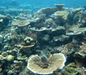 Photo of Patch reef in Truk lagoon, Micronesia.