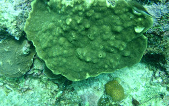 Eroded coral growing in more acidic conditions