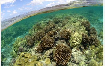 Photo of a coral reef in the Northwestern Hawaiian Islands.
