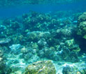 Photo of the lagoon reef at the Moorea LTER site.