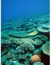 Coral reef disease outbreaks have hit healthy sections of Australia's Great Barrier Reef.