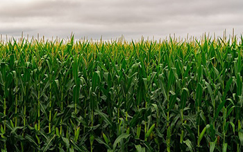 Pollution reductions contributed to an increase in corn and soybean yield.