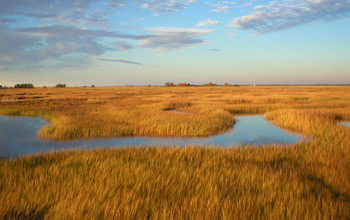 Salt marsh  with a tidal creek at NSF's Plum Island Ecosystems LTER site in Massachusetts.
