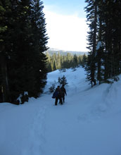 Photo of scientists snowshoeing to the NSF CZO site through mountain forests in the Sierra Nevada.