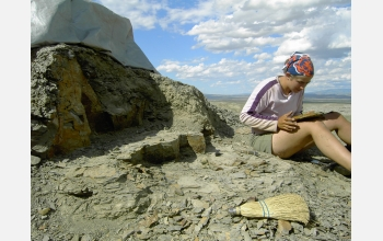 Ellen Currano collecting fossil leaves from a site that is 57 million years old in Wyoming.