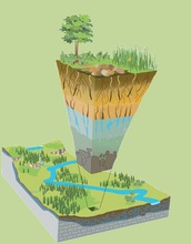 Earth's critical zone: from the base of bedrock to the top of the tree canopy.