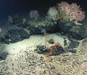 Photos of rocks made of basalt on and under the ocean bottom.