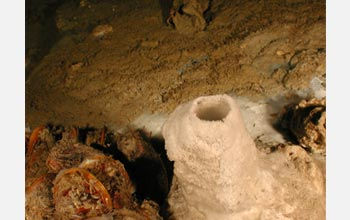 A mineral chimney and microbe mats on the sea floor in the Gulf of Mexico.