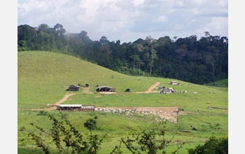 Photo of cleared land for grazing bulls in Para State, Brazil.