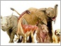 A baby Rapetosaurus stands alongside a dog, elephant, rhino and hippo