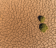 Aerial view of trees and cracked earth in Death Valley, California.